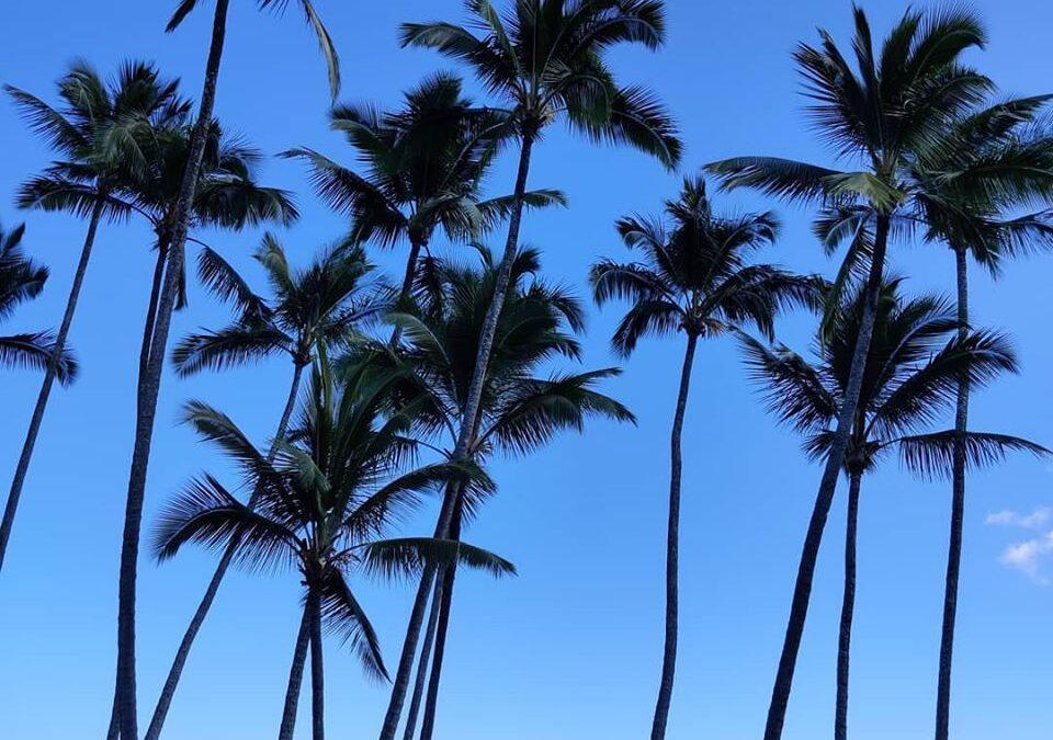 Kryssning till Hawaii